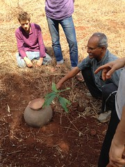 Establishment of trees in first year