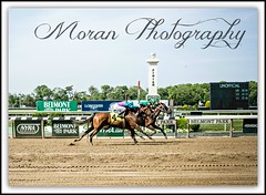 (EASY GOER) Tags: park horses horse ny newyork sports race canon 50mm athletics track belmont competition running racing 5d 12 athletes races thoroughbred equine thoroughbreds competing belmontpark markiii