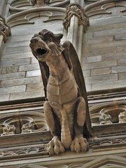 Stone Observer (kkbrians) Tags: barcelona travel statue architecture wings spain dragon cathedral gothic goth catalonia gargoyle gryphon