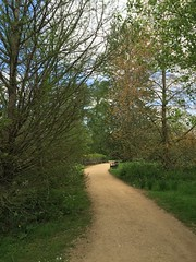 Lunch time walk around University Parks (breakbeat) Tags: summer green nature water publicspace river stream university parks foliage oxford cherwell