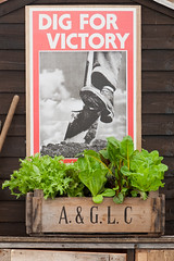 Dig For Victory (Alan Buckingham) Tags: poster salad shed vegetable container lettuce mizuna digforvictory woodenbox hamptoncourtflowershow2011