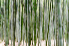 Arashiyama Bamboo Forest (p.fabian) Tags: japan bamboo jp  bamb icm bambus  japn  kytoshi kytofu japn