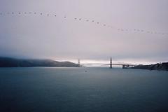 Flock (Nicholas_Luvaul) Tags: leica m6 classic kodak film 35mm bay area san francisco sf bridge fog birds sky gloom summer