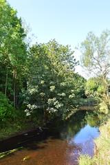 Kilmarnock-Irvine Cycle Path. Annick Water, Upstream. (Phineas Redux) Tags: kilmarnockirvinecyclepath ayrshirecyclepaths ayrshire scotland annickwaterayrshire sustranscyclepathno73