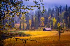colors of fall (SeALighT!) Tags: autumn fall suomi finland finnland lapland lappland kslompolo kskero lake barn trees