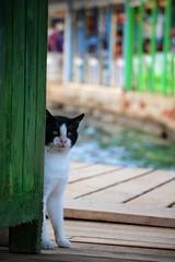 Gmlk, Bodrum, Mula, Trkiye / 2016 (onuruye) Tags: photooftheday flickr like love canon gmlk bodrum trkiye turkey world travel popular pet animal cat photography photograpgh photo