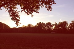 (agalerabranca) Tags: sunset naturaleza sun plant tree sol nature canon atardecer eos soleil spain tramonto natura rbol campo sole albero arbre anochecer aranjuez 2015 1200d