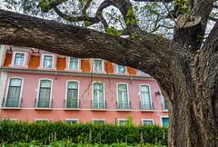 Limb (kimbar/Thanks for 2.5 million views!) Tags: pink windows tree portugal lisbon greenery apartmentbuilding