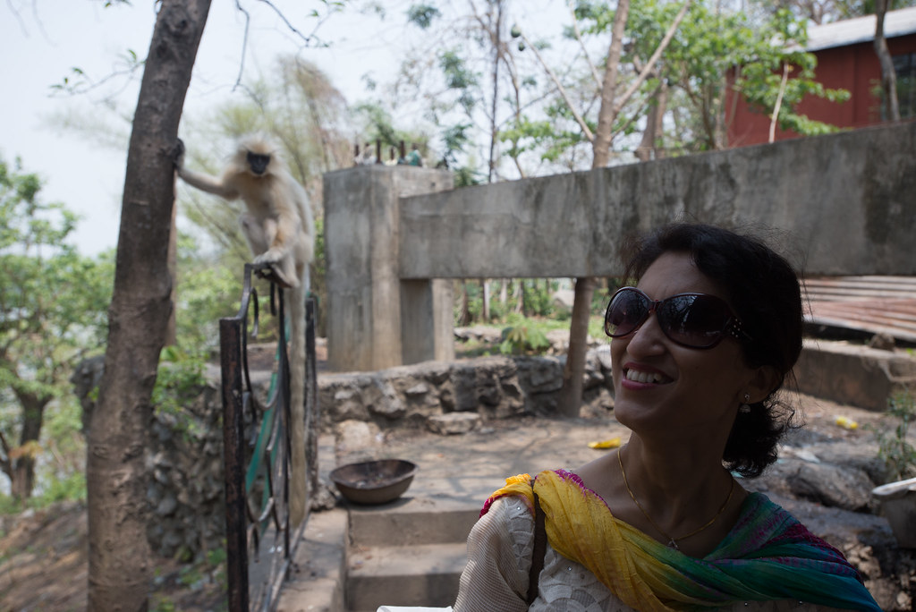 Ruma and the languar monkeys