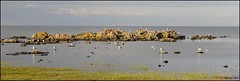Coastline Bornholmisland (dirklie65) Tags: sea panorama seagulls baltic coastline dnemark ostsee mwen kste bornholm dirklie65