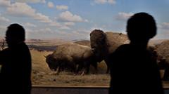 Bison (Alberto Prez Puyal) Tags: new york newyork history tourism animal museum america unitedstates natural wildlife tourist alberto bison 2009 perez puyal albertoperezpuyal
