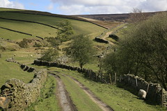 The winding path (Blue Pelican) Tags: sheep path derbyshire may fields drystonewalls glossop moorfield