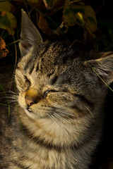 IMG_5820 (Lightcatcher66) Tags: florafauna makros katzencats lightcatcher66