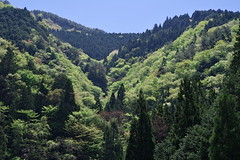 Verdure of mountain - Pentax K-1 Test shot (Koh Mikawa) Tags: mountain green flesh forest spring pentax valley earlysummer verdure k1 vigor greenness