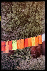 DSC03923-Edit.jpg (Mac'sPlace) Tags: red orange tree sports yellow garden football bush line shirts washing bibs filmframe