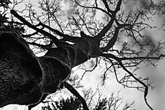 Kyjovsk dol (trekkpics) Tags: city travel urban white holiday black mountains berg rock rural landscape schweiz dresden wasser czech outdoor urlaub pflanze tschechien tschechische republik czechmountains schloss bahn landschaft wald wandern elbe abstrakt deutsche felsen gebirge schsische zamek dn hory labe textur kraj einfarbig decin bhmische lausitzer esk vcarsko heiter drhy vrch luick chibsk studenec colourartaward steck chibsk