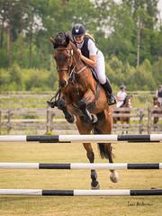 _61A8521.jpg (fotolasse) Tags: horse tingsryd hst tirk brjes hsthoppning travet hsthoppningtravet