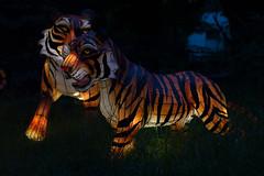 _DSC9494_2 (Elii D.) Tags: light fish flower animal night zoo monkey neon dragons lantern lampion dargon