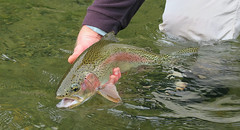A Perfect Rainbow (E. Hanson) Tags: canon pacificnorthwest flyfishing yakimariver catchandrelease g7x keepemwet