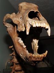 Gem Rock20140401_654 (gsas777) Tags: amber gem stones dinosaur skeleton old jurassic park fossil purple amethyst fish