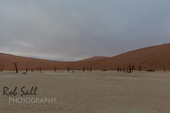 Waiting for Sunrise in Deadvlei (robsall) Tags: africa vacation canon nationalpark sand desert redsand canon5d namibia canoneos sanddunes nama sossusvlei 1635 deadvlei 2015 namibdesert canonllens canon1635mm redsanddunes hardap namibnaukluftnationalpark canon1635 1635f28 1636mm canon1635mmf28liiusm canon5dmarkiii 5dmarkiii 5dm3 5dmark3 oldestdesert vastplace 5dmiii canon5dm3 canoneos5dm3 robsallphotography namibasanddunes