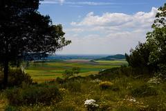 LA CASTILLA DE LOS LMITES (marthinotf) Tags: primavera paisaje nubes cereales jara vegetacin castilla trigos airelibre tudeladeduero mieses cebadas villabaez corredordelduero