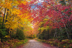 Autumn in Killarney (Tracy Munson Photography) Tags: camping autumn trees fallleaves ontario canada fall nature leaves landscape georgianbay autumnleaves killarney dirtroad fallcolours killarneyprovincialpark parksontario