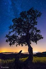 Bajo las estrellas (vilchesdavid) Tags: longexposure roses sky tree night stars noche estrellas nocturna empord