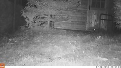 20160712-15 Vossen (-AR-) Tags: film nature animal night garden movie nacht natuur fox tuin dier veluwe territory vos vulpesvulpes hoenderloo territorium