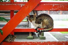 Today's Cat@2016-07-15 (masatsu) Tags: cat pentax catspotting mx1 thebiggestgroupwithonlycats