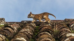 Gato (Jose Losada Foto) Tags: españa casa calle andalucía nikon jose huelva gatos ciudades fotos lugares campo animales fotografia casas excursión higueradelasierra nikond90 joselosada