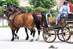 IMG_8771 (dreiwn) Tags: horse carriage kutsche pony pferd equestrian horseback ludwigsburg 2012 horseriding horsecarriage hnger horsemarket pferdemarkt pferdekutsche reitturnier pferdekopf horsedriving pferdesport pferdehnger turnierreiten
