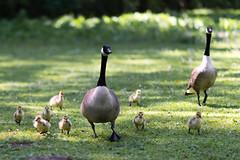 Rombergpark - -6723 (clickraa) Tags: spring dortmund rombergpark frhlling