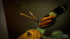 Enfoque - Desenfoque (Martn Melo Garay) Tags: ecuador nikon flor tropical fx mosca mariposario d610 mindo pichincha allyouneedisecuador