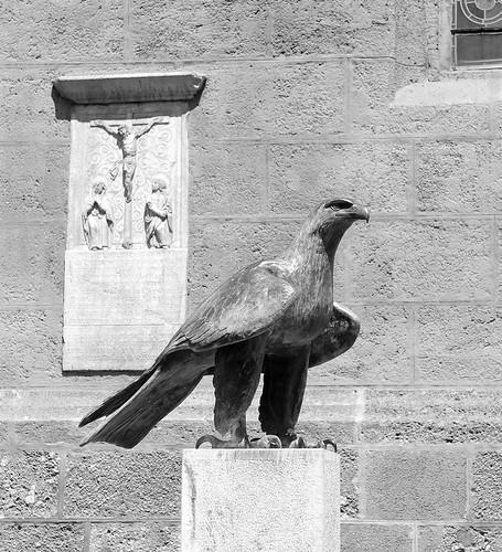 Bird of prey ©  Andrey
