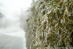 Frozen Bush (Avelino Zepeda) Tags: winter mist ontario canada cold ice fog frozen guelph icestorm winterstorm