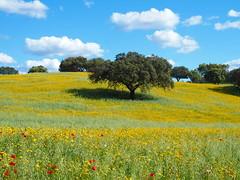 Primavera no Alentejo (rgrant_97) Tags: flowers trees sky primavera portugal landscape spring paisagem alentejo guadiana elvas juromenha