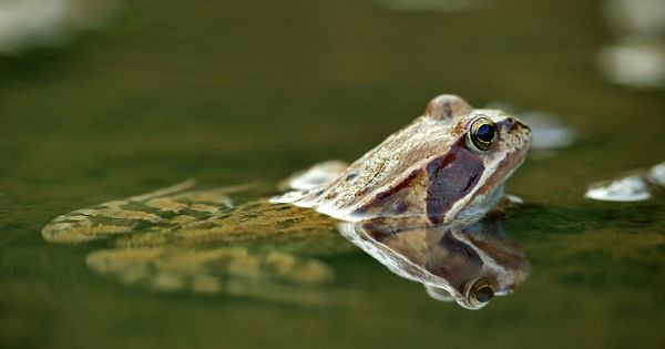The World's Best Photos of frog and gift - Flickr Hive Mind