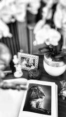 21/05/2016 day 272 : Africa Laurent Baheux (shaye.photo@yahoo.fr) Tags: paris weather book cloudy lion safari figurine miss livre laurent meteo iphone project365 365days 500px 365photos iphonephoto baheux missmeteo ifttt iphone6s