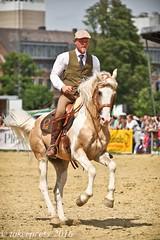 Pintos_Equitana_2016-9896 (tokerpress) Tags: messe pferde shou pintos tokerpress alexandertoker equitanaopenair ctokerpress2016 gestütgoldenepintos
