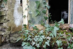 Window(less)... (zapperthesnapper) Tags: plant building mill broken window glass ivy cumbria damaged oldmill dereliction yorkshiredales sedbergh farfieldmill ivyplant oldproperty