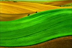 Pannonian sea (Katarina 2353) Tags: panorama green film landscape spring nikon fields photopainting katarinastefanovic katarina2353 serbiainspired