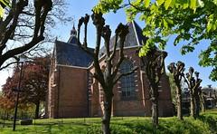 De Hippolytuskerk in het plaatsje Middelstum (Gr.) (Maarten Kroon) Tags: holland tree church bomen thenetherlands groningen kerk dorp wilgen middelstum knotwilgen