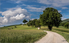 Colline di San Severino Marche (Luigi Alesi) Tags: road trees sky italy nature alberi clouds way landscape 50mm nikon scenery san strada italia raw nuvole natura severino cielo d750 marche dei paesaggio collina macerata ciliegi gaglianvecchio