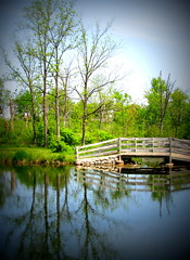 IMG_7938 (Mat_B) Tags: bridge blue reflection tree green nature water forest photography wooden spring walk area pro recreation rrr preserve fel 2016