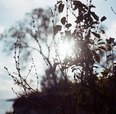 Seasonal (Laura-Lynn Petrick) Tags: toronto canada nature sunshine mediumformat landscape landscapes captured lynn series summertime naturalwonders canadiana scarboroughbluffs petrick naturistic lauralynnpetrick lauralynnpetricknature lauralynnpetrickmediumformat lauralynnpetricktorontolaura