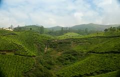 Plantation landscape.jpg (melissaenderle) Tags: vacation teaplantation rural asia kerala mountain
