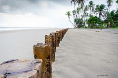 Mayaro, Trinidad (TriniLuvyT) Tags: leading lines beach coconut trees ruin sea wall