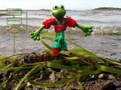 Algorithm for the algae rythm (The Famous Froggies) Tags: green beach water waves algae washedup outing froggie bendable flickrbingo4i25