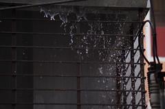 Rain sprinkles (Arefin Alvi) Tags: water beautiful rain photography zoom awesome sprinkles splash fastshutter grills
